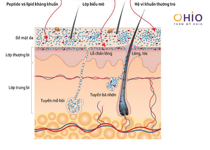Nguyên nhân do tuyến bã nhờn hình thành mùi hôi cơ thể